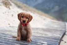 Cuter than cute / by Sarah Cook