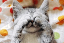 Meow Meow Meow / by Julianne McKenna-De Lumen
