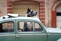 Pets Love VW's