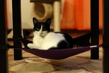 Kitties in Cat Cribs / Kitties enjoying their Cat Crib cat hammock! Want to include your photo? E-mail us at info@catcrib.com