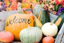 Seasonal Decorating - Fall / Decoration Ideas for Fall, Halloween, Thanksgiving / by Jessica Nielson