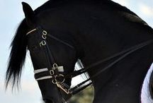 Saddle & Stirrup / Horses, thoroughbred, horse racing, quarter horse, dressage, western horse, barns, jockeys, horse movies, horse books, saddles, bridles, horse ranches, horse art, etc.