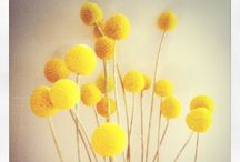 BuNcHeS oF SuNsHiNe / All things yellow / by Carrie C