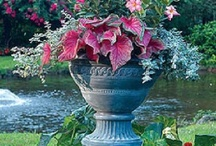 Container Gardening / by Mary Kay Crawford