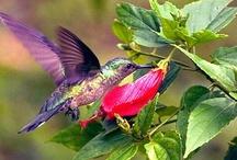 Hummingbirds / by Mary Kay Crawford