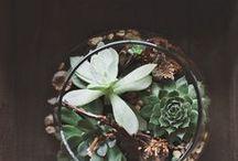 Plants & Garden / by Michelle Peterein