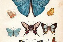 Botanics, Fauna & Minerals