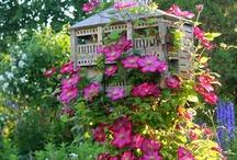 Secret Garden / by Linda Robertson McCowen (Linda R. Haney McCowen)