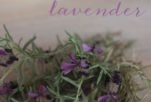 Lavender Love /  I do not claim ownership of the images that I post on this site. If I do own one, I will make note of it..