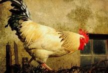Nice Nice Chicken