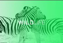 WILD Life / by Boca do Lobo
