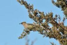 Back Yard Birds-Life,Feeders+ / birds,sm.animal outside life
