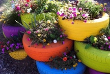 How does your garden grow? / by Nicole Rossow-Nicholes