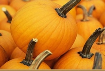 Pumpkin Patch / All things Pumpkin!  Pumpkin decorating and carving ideas, carving templates, recipes and more. / by Karen R