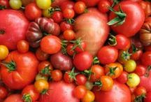 Lifestyle | Tomatoes / Anything and everything tomato-inspired.