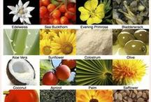 Wellness: Herbs, Spices, Oils, Food, Water