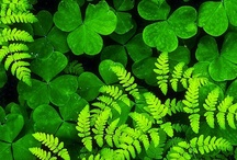 Luck O' The Irish / Celebrating St.Patrick's Day. Recipes, Crafts, Decorations, Irish Lore and more.