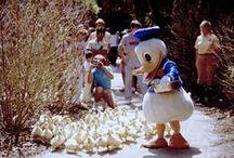 Patos y patos  / Fotos de patos o cosas que se llamen pato