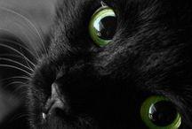 hayvan sevgisi her yerdedir ( animal love is in everywhere )