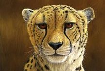 Wildlife Paintings:  Inspiration / These are some of the images that inspire me as I paint wild animals in Photoshop.