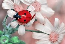 Ladybugs / This lucky little lady bug has landed here to stay To make my garden pretty and keep the weeds away. — Author Unknown