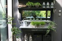 Gardening / Ideas for keeping your garden growing well all year long.