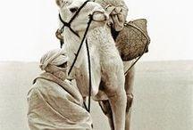 travel | Desert Kingdoms