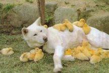 ❤ Cute ᎪᏞᎬᏒṮ ❤ / cute things, mainly cute animals