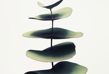 Nature / by Josep Cochran