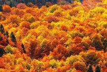 Hösten jag älskar dig.