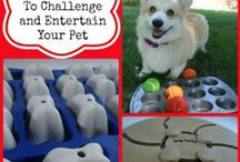 Pets, Pets, and More Pets! / Everything Pet Related / by Carleen Coulter