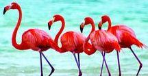 Fabulous Flamingos / flamingo everything