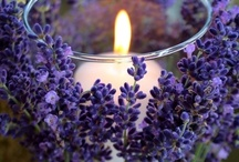 French  Lavender Lilac Violet Purple / French lavender violet purple lavender lilac / by Royal Rococo