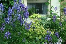 Cottage Flower Garden / French cottage Chateau nature flowers gardens