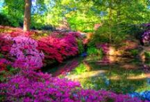 Picturesque of Beautiful Nature photography / nature photography