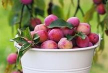 From the Garden / natural organic garden grown food