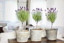 Rustic Charm / All things rustic and charming in home decor. It is still modern, but with a rustic feel. Pin them on your own home redecorating board for later use.