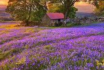 English Countryside / ENGLISH COUNTRYSIDE