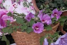 My Garden / my flower gardens
