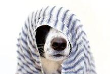/DogDogDog / by Jeeb Sintawanon