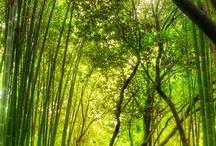 Gorgeous Green / lush, lovely, luscious green