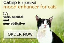 Happy Healthy Cats / For people who love cats and who want their precious feline friend to live a long, happy life.