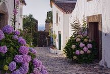 Scenic Streets / by Linette Terry