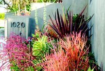 Drought-Friendly Landscapes / Having a drought-friendly home landscape doesn't mean it must be brown and lifeless. Take inspiration from these images and accomplish your drought-friendly landscape!