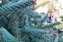 Holiday Garden Decor / Celebrate the holidays with special touches from your garden. Be it berries, twigs, leaves, or branches, guests will appreciate the little touches and you'll look like the hostess with the mostess.