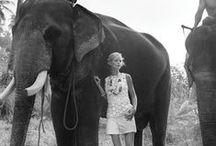 Elephants | Travel Inspiration / A little travel inspiration by the popular travel blog and community: #TravelBreak  Go to TravelBreak.net for full articles.