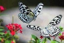 Butterflies / by Lynett Hamilton