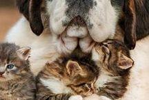 Furry Friends / Furry Friends.