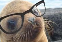 Animals in Glasses / We love it when we see cute animals wearing glasses. Who can resist?