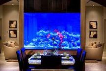 Home- Aquariums